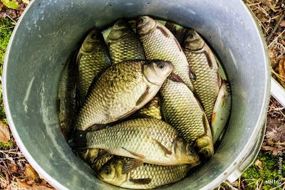 Photo of Календарь рыболова на завтра