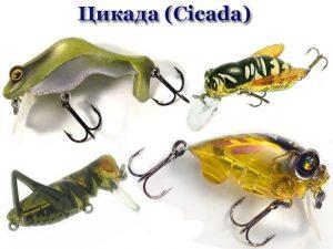 """Классификация и виды воблеров Цикада (""""Cicada"""")"""