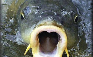 Фото для Успешная рыбалка