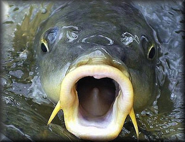 Photo of Успешная рыбалка