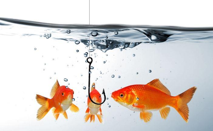 Photo of Где и почему ловится рыба