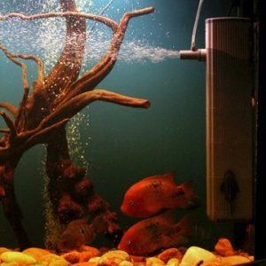 Подарок для рыбака: Аквариум в качестве подарка как не испортить впечатление