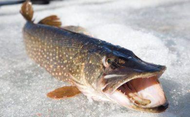 Зимняя рыбалка. Ловля рыбы на спиннинг зимой