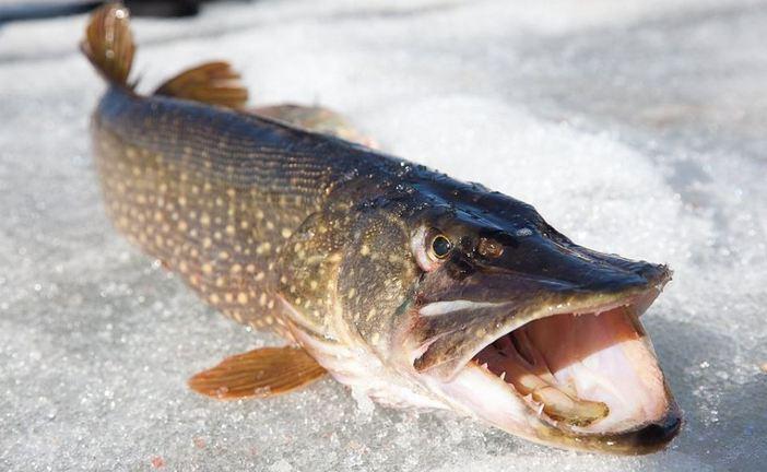 Photo of Зимняя рыбалка. Ловля рыбы на спиннинг зимой